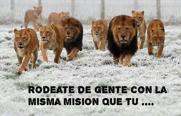 Juntate con leones